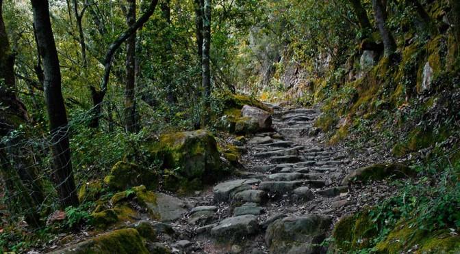 3. Mai – Kräuterspaziergang am alten Kanal